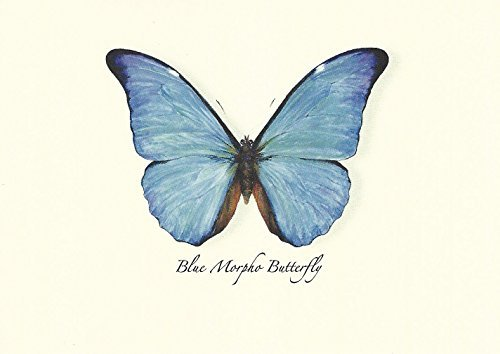 Blue Morpho Butterfly Boxed Notes - Set of 8