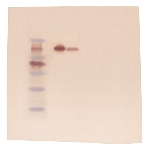 Edvotek 317 Western Blot Analysis (Polyacrylamide-based), For 6 Blots
