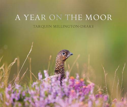 Download A Year on the Moor pdf epub