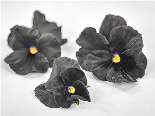 (David's Garden Seeds Flower Pansy Black King SL0893 (Black) 50 Non-GMO, Heirloom Seeds)