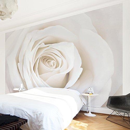 Fotomural-Pretty-White-Rose-Mural-apaisado-papel-pintado-fotomurales-murales-pared-papel-para-pared-foto-mural-pared-barato-decorativo