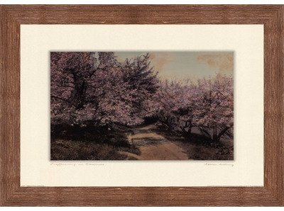 Framed Disappearing Blossom- 24x18 Inches - Art Print (Brown Barnwood Frame)