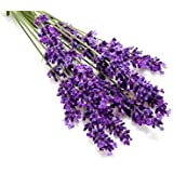 Kitchen Garden Hub - Superb Seeds Herb Seeds : Lavender English