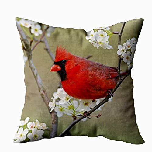 Shorping Zippered Pillow Covers Pillowcases 16X16 Inch Male Northern Cardinal Among pear Tree Decorative Throw Pillow Cover,Pillow Cases Cushion Cover for Home Sofa Bedding Bed Car Seats Decor