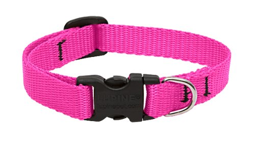 LupinePet 1/2-Inch Hot Pink 8-12-Inch Adjustable Dog Collar for Small Dogs