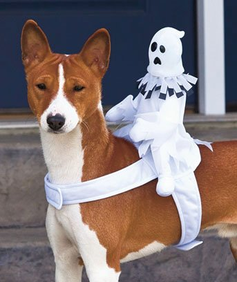 Ghost Ride On Dog Halloween Costume, My Pet Supplies