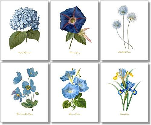 Blue Flower Wall Art - Vintage Floral Decor - Botanical Prints (Set of 6) - 8 x 10 - Unframed