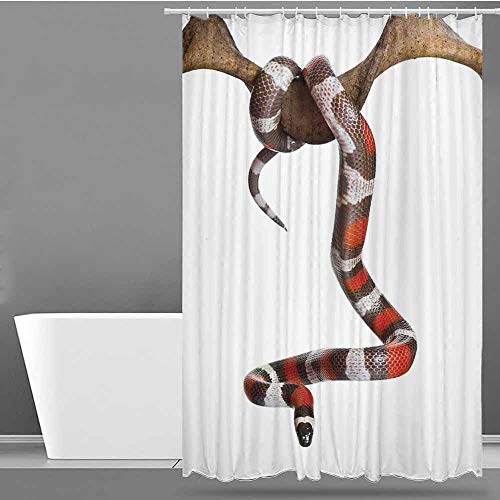 VIVIDX Waterproof Bathtub Curtain,Reptile,Wild Milk Snake Enjoying Life Creepy Creature Stylish Nature Studio Artful Photo Toxic Print,Shower stall Curtain,W60x72L Multi (Difference Between Coral Snake And Milk Snake)