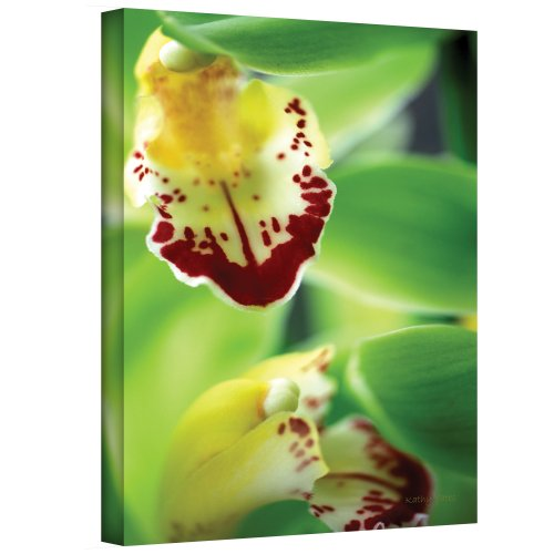 Art Wall Cymbidium Sea Foam Emerald Orchid Gallery Wrapped Canvas by Kathy Yates, 16 by 24-Inch