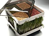 Healthy Sprouter - Wheatgrass Grower, Grow Your Own Sprouts and Micro-Greens Too! No Green Thumb Needed!