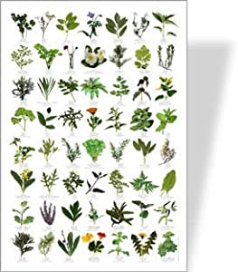 Garden HERBS Poster - 56 HERB images: Amazon.co.uk: Toys & Games