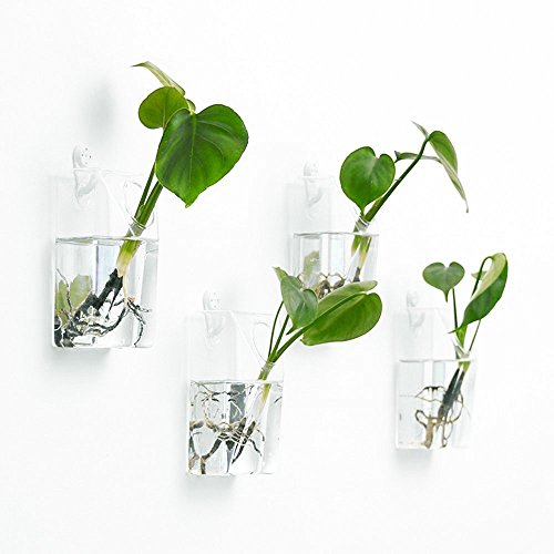 Mkono 2 Pack Wall Hanging Plant Terrarium Glass Planter, Rectangle by Mkono (Image #3)