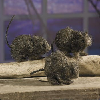 realistic-hairy-rats-party-and-events