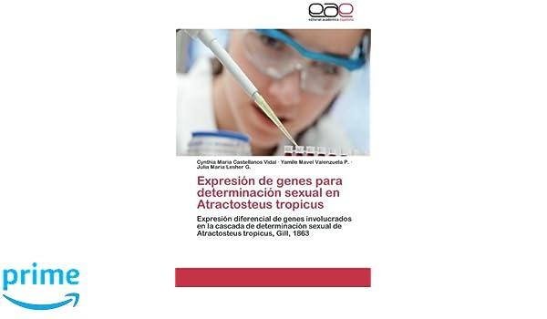 Expresión de genes para determinación sexual en Atractosteus ...