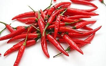 Amazon.com: Pimienta de Cayena semillas, largo rojo fino ...