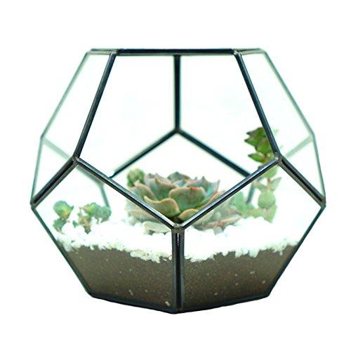 Glass Terrarium Brass Pentagon Regular Dodecahedron Geometric Container, LoveNite Sphere Terrarium Desktop Planter for Succulent Fern Moss Air Plants (Black) by LoveNite