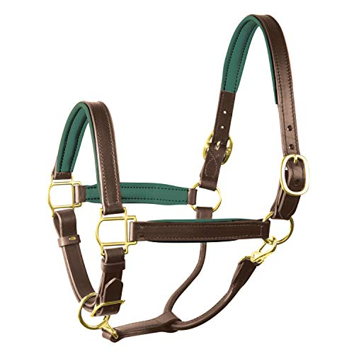 Perri's Padded Leather Halter (Havana/Hunter Green, Horse)