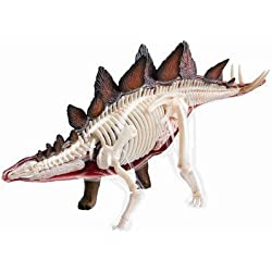 Learn about the Stegosaurus Dinosaur Anatomy - 11 inch 4-D See-thru Model (Age 8+) by TEDCO