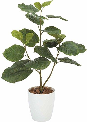 光触媒 人工観葉植物 光の楽園 ウンベラータ 1.8m 172A350 B00XHQH8PY 幅85×奥行70×高さ180cm  幅85×奥行70×高さ180cm
