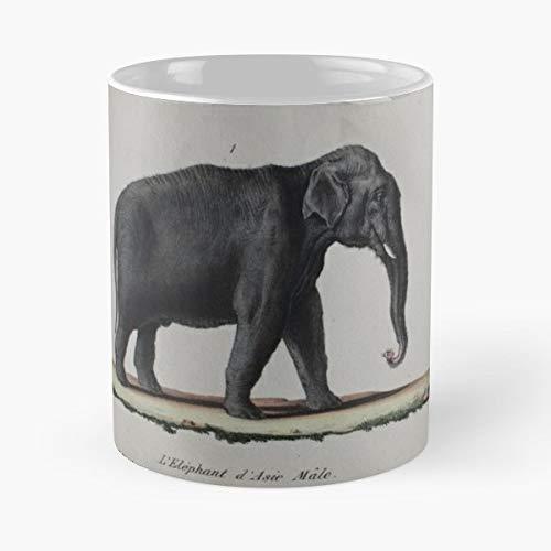Antique Handcoloured Engraving 1833 - Morning Coffee Mug Ceramic Novelty Holiday 11 Oz