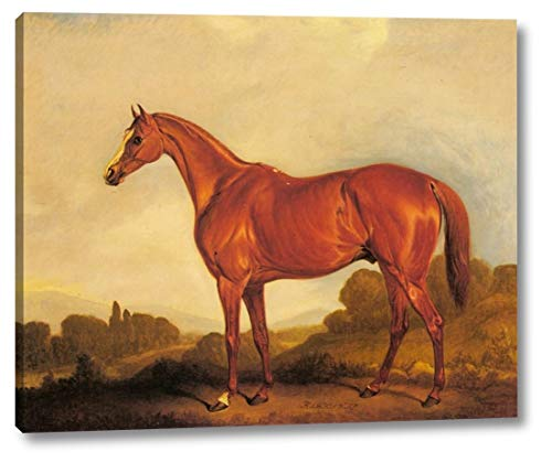 A Portrait of The Racehorse Harkaway, The Winner of The 1838 Goodwood Cup by John Ferneley SNR. - 18