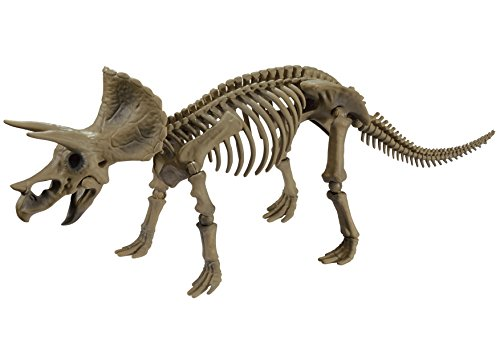 Pose skeleton of the dinosaur Triceratops 102