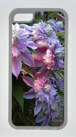 Clematis Josephine Transparent Sides Rubber Shell TPU Case for Iphone 5s for you by Sakuraelieechyan