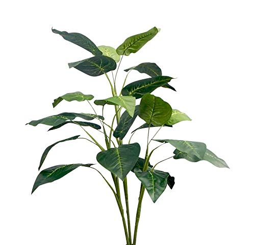 (Ella and Lulu Unpotted Bird of Paradise Tree, 36-in, Green)