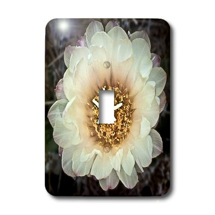 3dRose lsp_32378_1 Decorative Colorful Garden Botanic Classic Plant Sw Southwest Desert Cactus White Gold Flower Single Toggle Switch by 3dRose