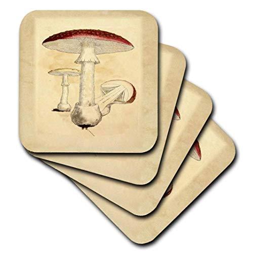 3dRose Image of Red Vintage Mushroom from Old Botany Book - Ceramic Tile Coasters, Set of 4 (CST_223063_3) ()