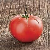 Beefmaster Hybrid Tomato 50 Seeds #995 Item Upc#650348691455