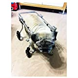 LY- Dog Treadmills Best Friend—Dog Wheelchair
