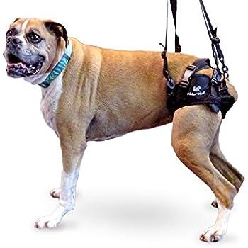 Amazon.com : Dog Lifting Aid - Mobility Harness - Large Size : Pet