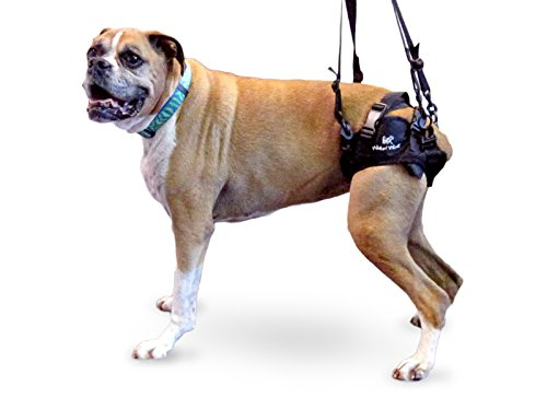 Walkin' Lift Rear Mobility Harness