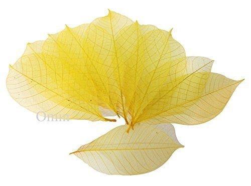 50x yellow Natural Skeleton Leaves Rubber Tree Scrapbook Craft Wedding Decor (Hobbycraft Decorations Tree Christmas)