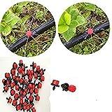ENVIDESO Chinese Broccoli-1000 Seeds, Kai LAN, GAI LAN, ICA Alboglabra, Open Pollinated