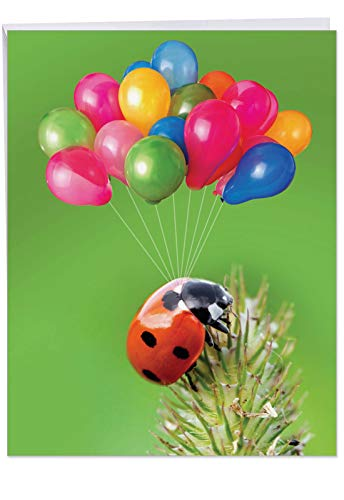 Jumbo Ladybug - 8.5