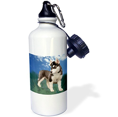 3dRose wb_4439_1 Siberian Husky Puppy Sports Water Bottle, 21 oz, White (Water Husky Bottle Siberian)