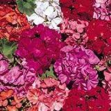 Fiore - Kings Seeds - Confezione Multicolore - Geranio - Country Gardens