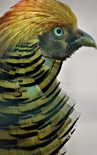 Notebook: Golden pheasant bird mane beak eyes quail wildfowl bird goose feather grouse partridge
