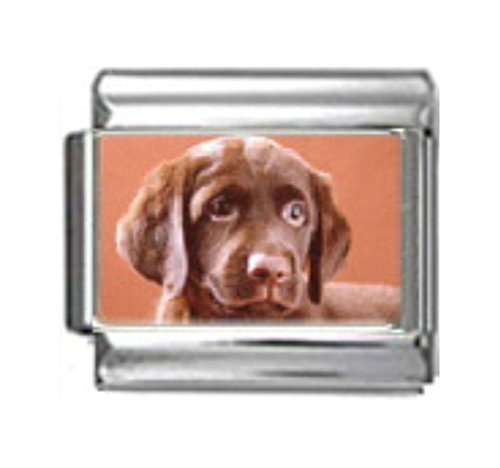 Stylysh Charms Labrador Retriever Dog Photo Italian 9mm Link DG262