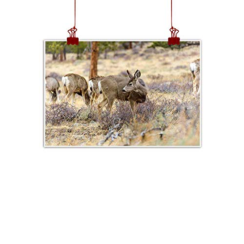 Living room decorative painting Mule Deer - Close-up view of mule deer feeding on Spring shrubs in a pine forest Early Spring in Rocky Mountain National Park Colorado USA Canvas Prints for Home Decor