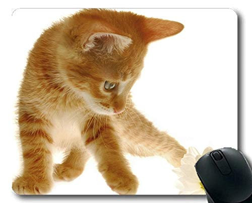Mouse pad,Animal cat Mouse pad,Mouse mat for Computer cat255 -