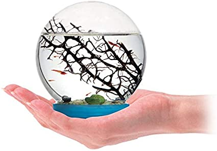 AntHouse Ecosistema Acuatico - Gambario - Biosfera Marina (con gambas Incluidas)