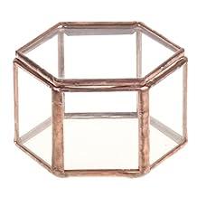 MonkeyJack Mini Hexagonal Clear Glass Jewelry Box Tabletop Succulent Plants Planter
