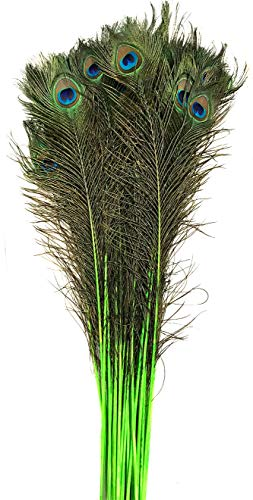 (American Feathers Eyed Peacock Tail Feathers 30-35