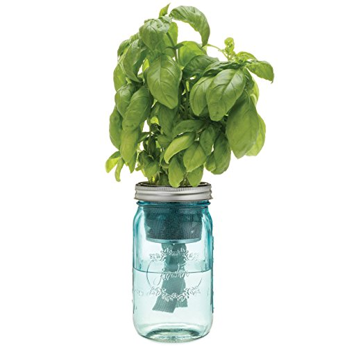 Herb Garden Kit – Self-watering indoor planter with organic basil seeds - Simple set-up and fertile with success