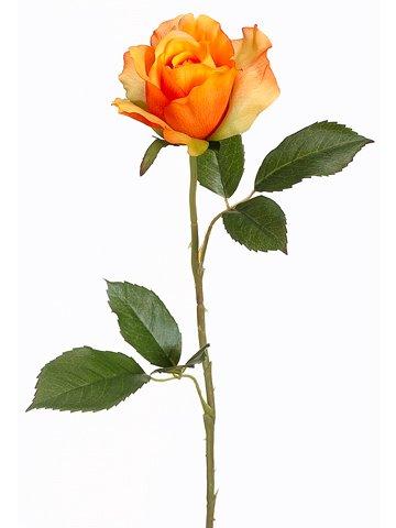 Orange Spray Roses - 22