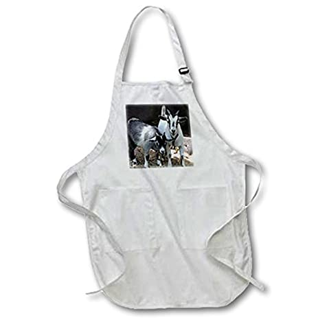 Medium 3dRose apr/_1068/_2 22 by 24-Inch Pygmy Goat Apron with Pouch Pockets
