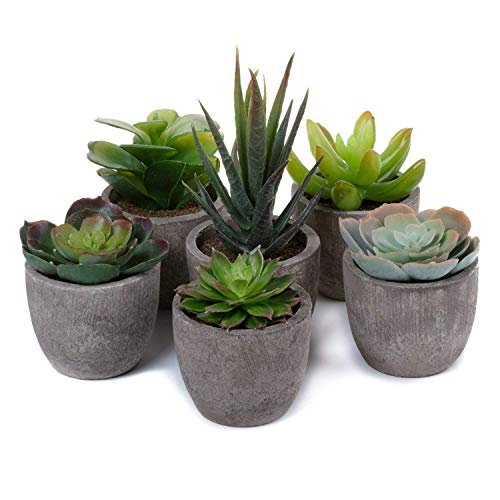 T4U Artificial Succulent Plants Potted, Mini Fake Succulent Plants in Pots for Home Office Wedding Decoration Pack of 6